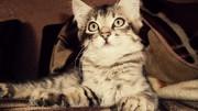 Отдам красивых котят