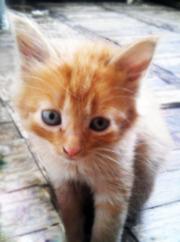 4 котенка ищут себе любящих и любимых хозяев